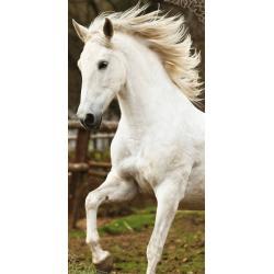 JERRY FABRICS Plážová osuška KŮŇ WHITE HORSE 70x140 cm